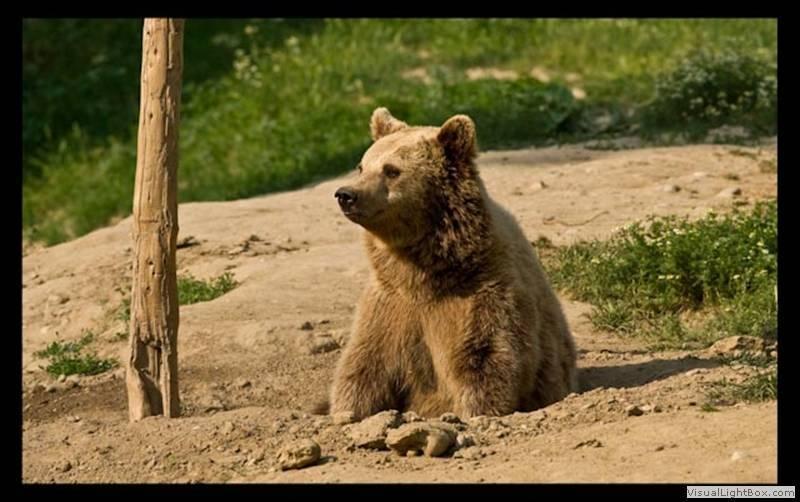 De prin Gradina Zoologica 20-01-31