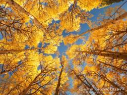 aut0686-fall-canopy.jpg